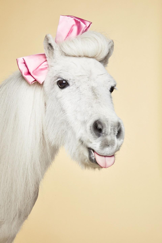 Das Leben Ist Ein Ponyhof Frauke Fischer Cosmopola